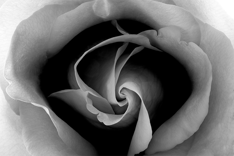 Within each rose © Harold Davis