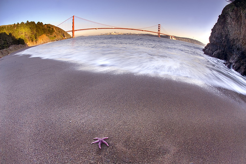 Starfish and Bridge by Harold Davis