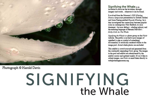 Signifying the Whale
