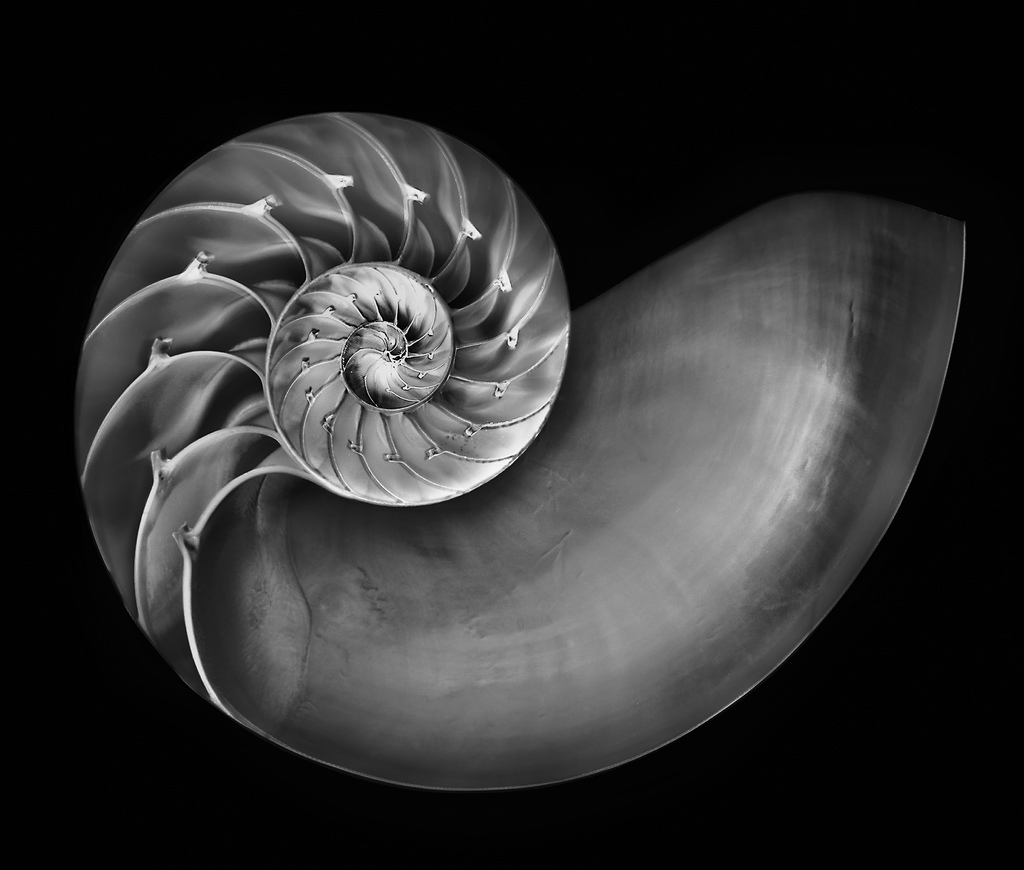Nautilus in Black and White