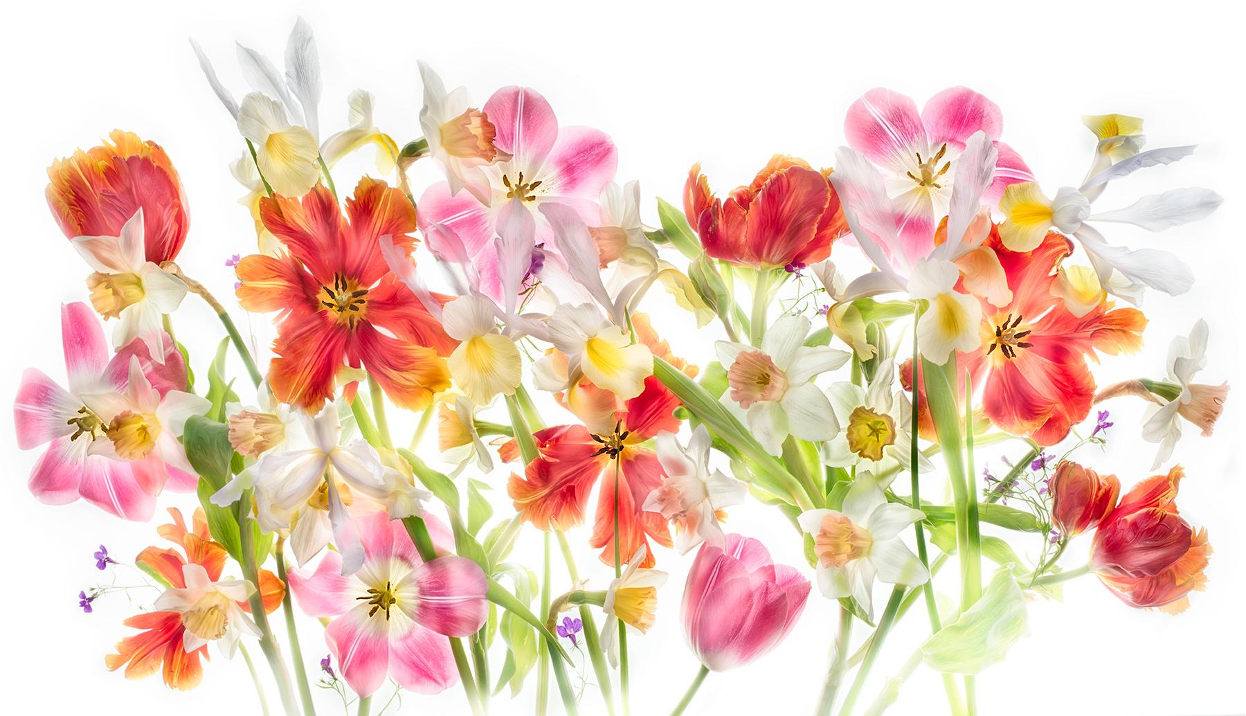 Flowers of Spring's Desire © Harold Davis