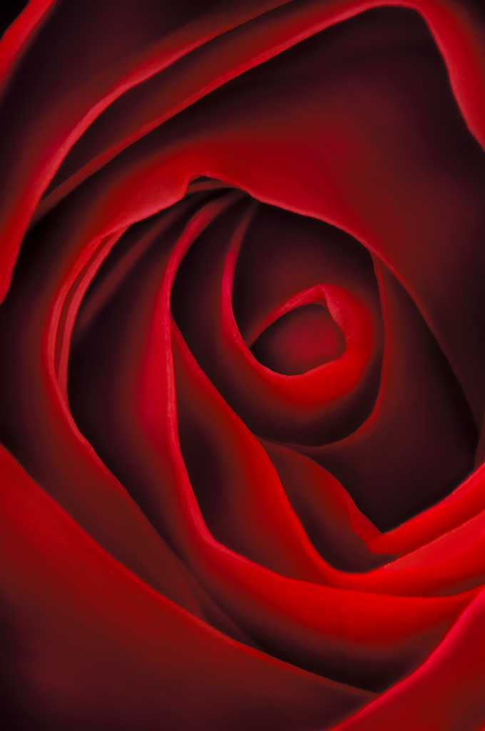 Kiss from a Rose © Harold Davis