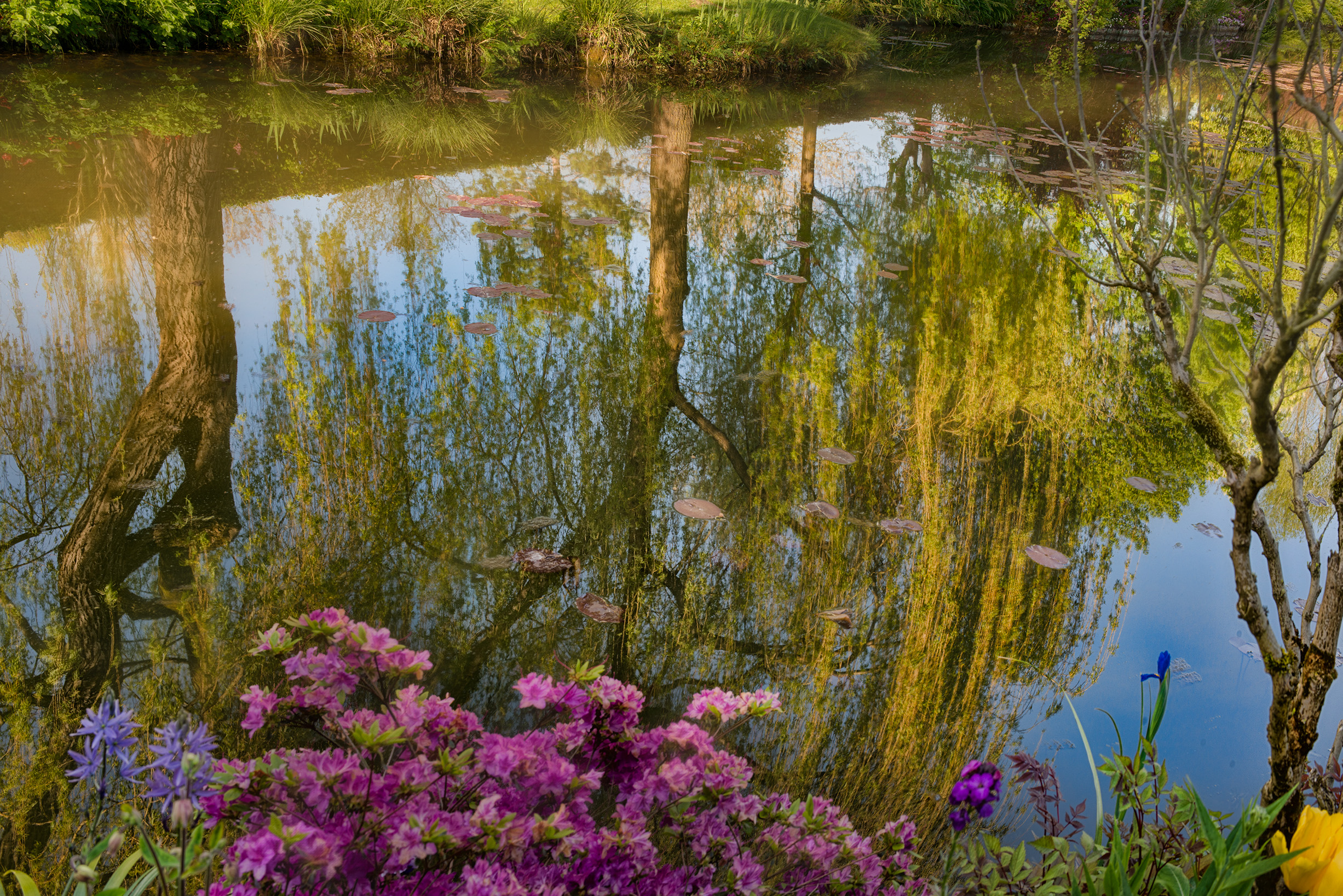 Willow Reflections, Giverny © Harold Davis