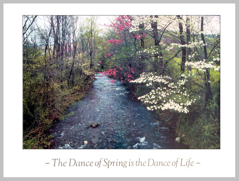 Dance of Spring Poster by Harold Davis